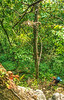 Taum Sauk section of Ozark Trail in Missouri - 18-Edit-Edit - 72 ppi-3