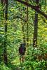 Taum Sauk section of Ozark Trail in Missouri - 20-Edit-Edit - 72 ppi