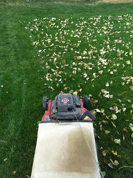 2016-09-08 – Its time to start the fall mowing. I love fall, but I hate the endless mowing for the next 4 to 6 weeks just to keep the lawn free of leaves. Today the grass did need to be mowed, but eventually the grass will stop growing and we'll be mowing just to pick up the leaves. I guess that is still better than raking them.