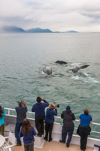 Cruise passengers marvel at a group of humback whale tales in the waters of Alaska