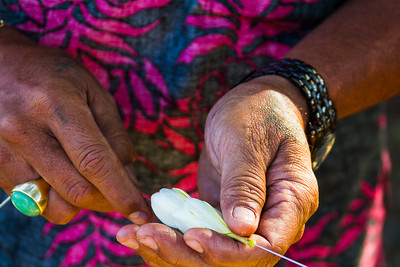 A pair of aged hands threads a needle through a white Plumeria flower in order to make a Hawaiian lei