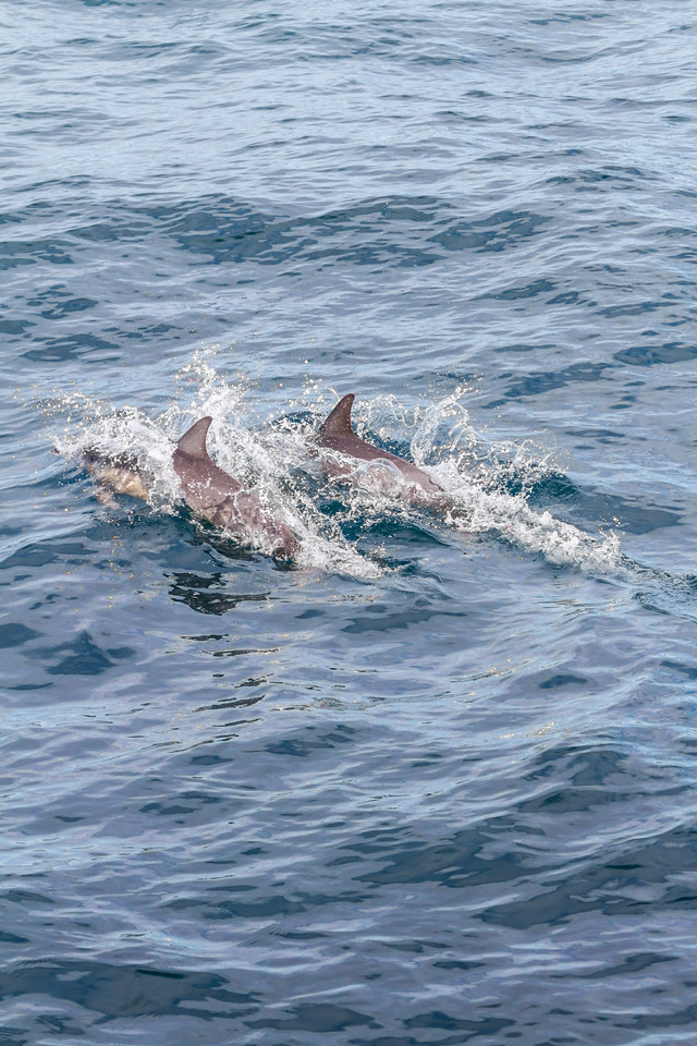 Dolphins swimming in sea - Mexico