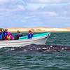 Tourists in boat photographing whale - Mexico