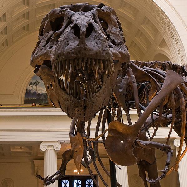 SQUARE VERSION Field Museum  T-Rex (Sue)