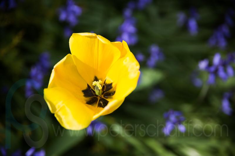 Gosberton Flower Festival 2014 - 108