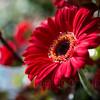 Gosberton Flower Festival 2014 - 88