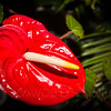 Gosberton Flower Festival 2014 - 23