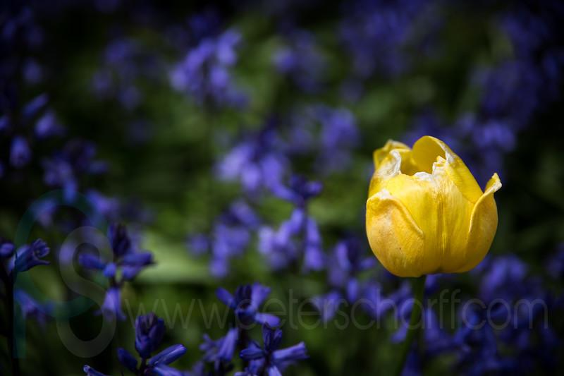 Gosberton Flower Festival 2014 - 106