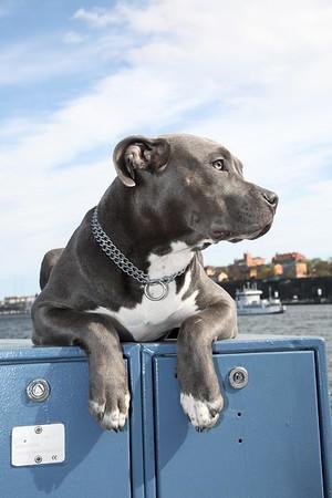 Fotografering Alexander Gustafsson och hunden Sativa