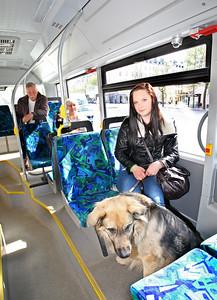 Åka kommunalt med Hund.