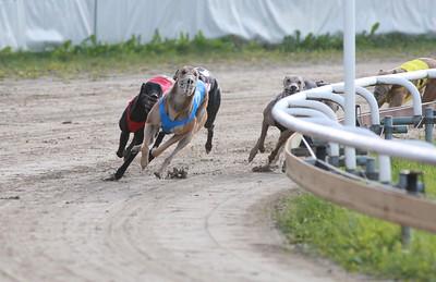 reportage från hundkapplöpning i  Åkersberga