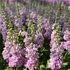 Helen Chambers - Evolve Flowers Ltd