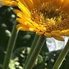 nicole_kosinska_yellow-2_2020-04-30_c6ae