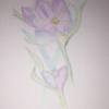 summer_allen_2020-04-30_e8a7