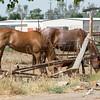 17 06-03 animals 5653