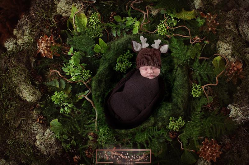 Linda Newborn deer Composite