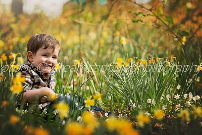 alex daffodils