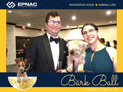 31st Annual Bark Ball SSIT