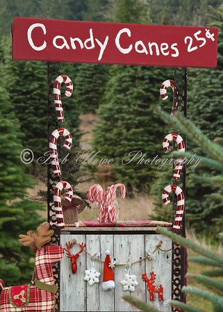 8x7 Candy Cane Stand