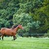 KS_Horse-24Sep16-Img-0007