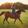 KS_Horse-24Sep16-Img-0287