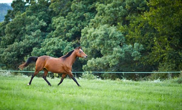 KS_Horse-24Sep16-Img-0008