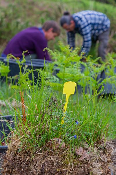 Transfert de plantes protégées entre Urrugne (la croix des bouquets) et la corniche côté Socoa.<br /> Étapes de l'opération par les services d'ADELI et le coodinateur du jardin botanique Paul Jouvet de Saint-Jean-de-Luz.