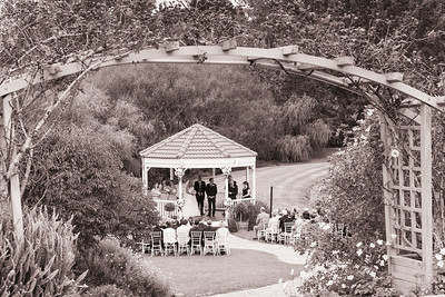 Gracehill Estate Vineyard