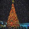 20171125-DSC_6741-Edit-Edit-Edit
