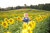 Diehl_Sunflower 014