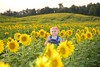 Diehl_Sunflower 018