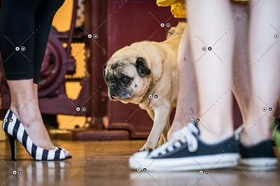 Danceworks_MadHotDance Gala_2014-06-13-84