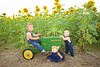 Breininger_sunflower_ 001