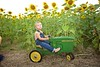 Breininger_sunflower_ 022