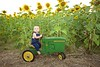 Breininger_sunflower_ 024