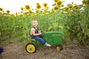 Breininger_sunflower_ 018