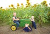 Breininger_sunflower_ 004