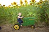 Breininger_sunflower_ 028
