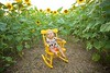 Clever_Sunflower_ 005