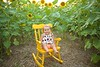 Clever_Sunflower_ 007