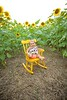 Clever_Sunflower_ 004