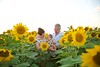 Clever_Sunflower_ 017