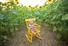 Clever_Sunflower_ 006