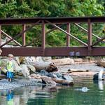 17-08-02 Porteau Cove_047