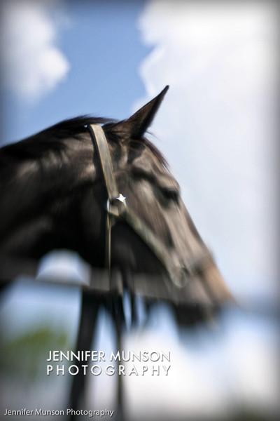 Artistic horse 5