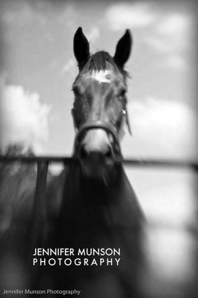 Artistic horse 3