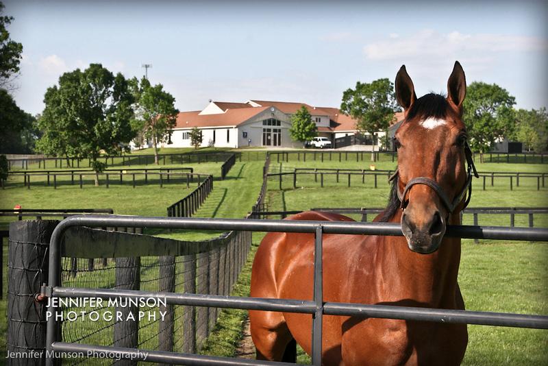 Horse patient