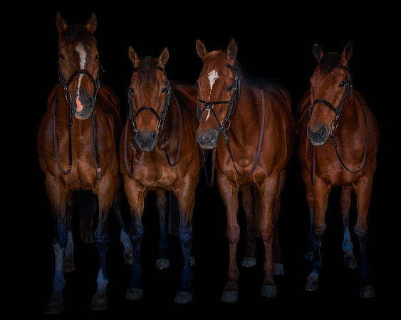 Dencrest Stable-674-Edit