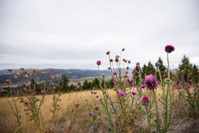 Montana_2019-0744