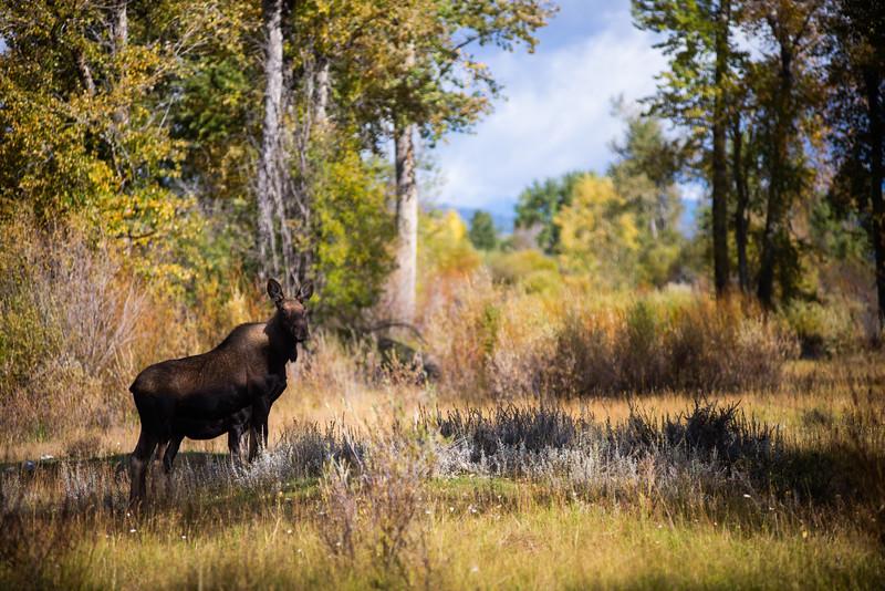 Montana_2019-0502